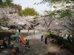 mikawadai